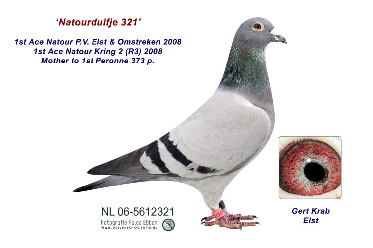 06-5612321 Natourduifje 321