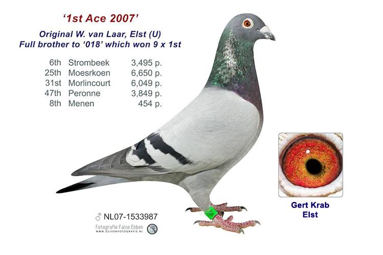 1st Ace 2007 - Wulf van Laar