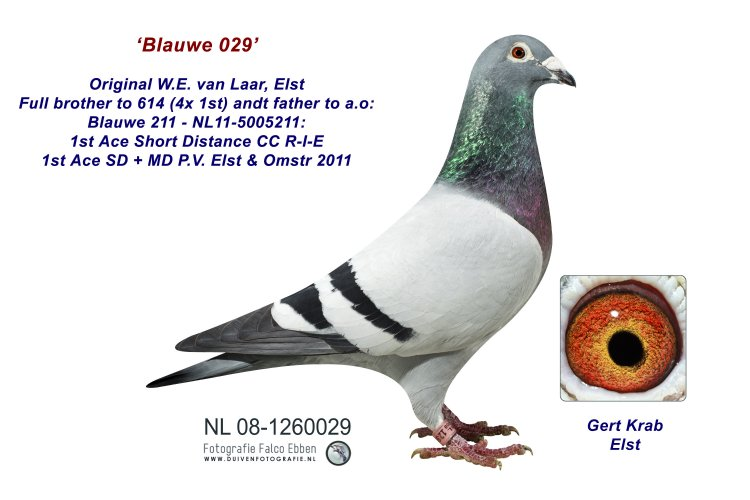 Blauwe 029 - Wulf van Laar