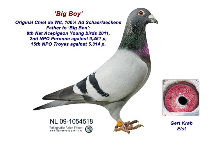 Big Boy - 100% Ad Schaerlaeckens
