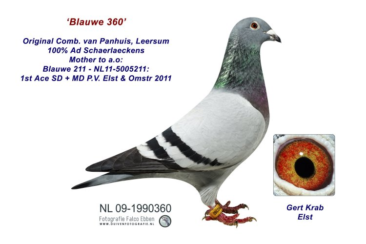 Blauwe 360 - 100% Ad Schaerlaeckens