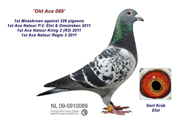 09-5910089 Old Ace 089