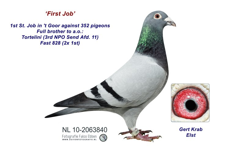 NL10-2063840 First Job