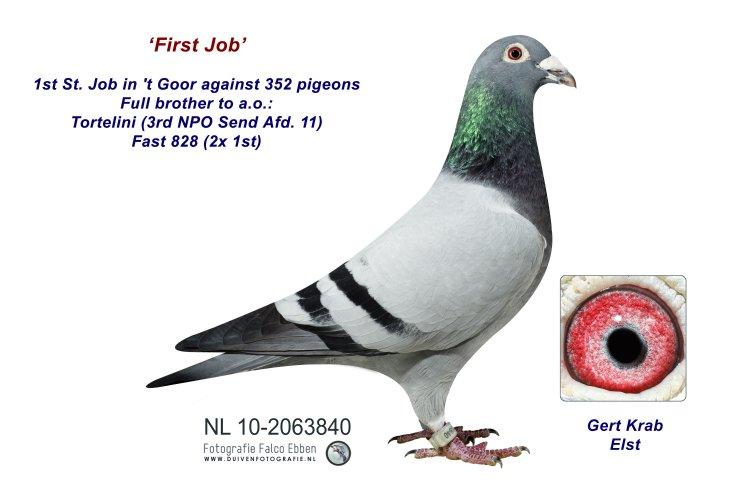 10-2063840 First Job