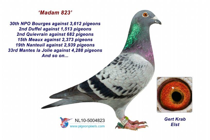 10-5004823 Madam 823