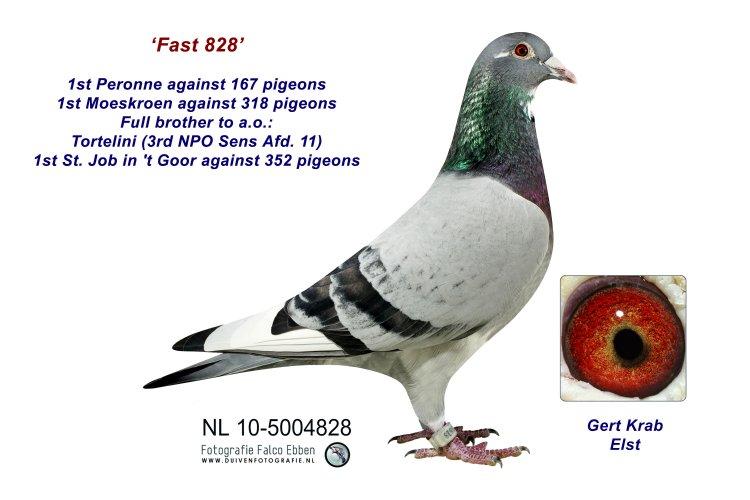 10-5004828 Fast 828