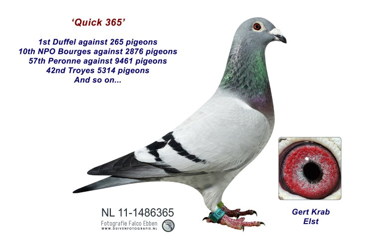 11-1486365 Quick 365