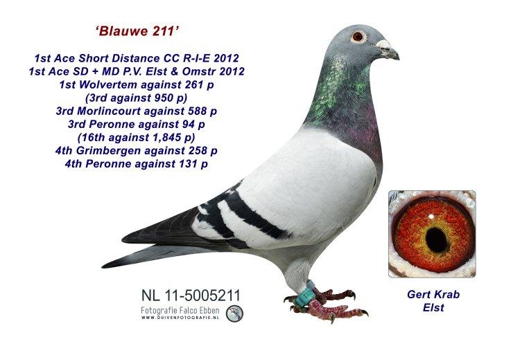 11-5005211 Blauwe 211