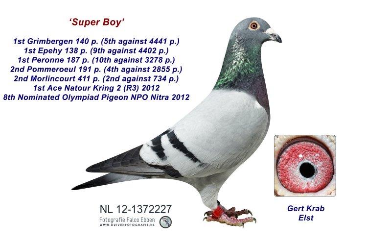 12-1372227 Super Boy