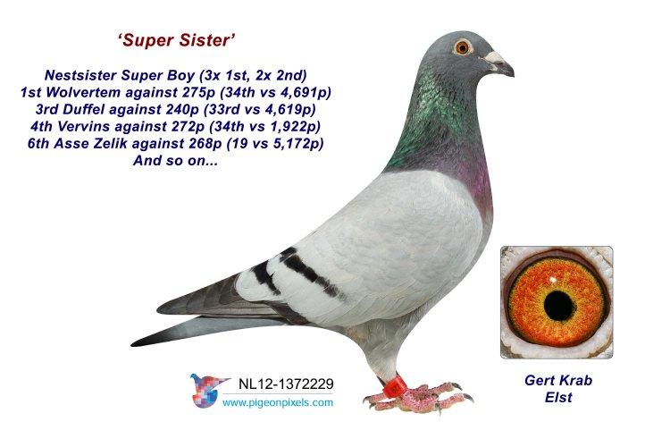 12-1372229 Super Sister