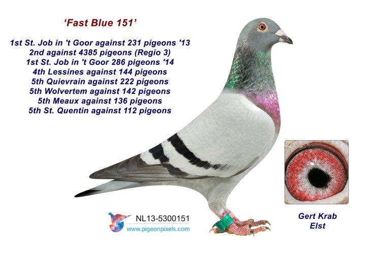 13-5300151 Fast Blue 151
