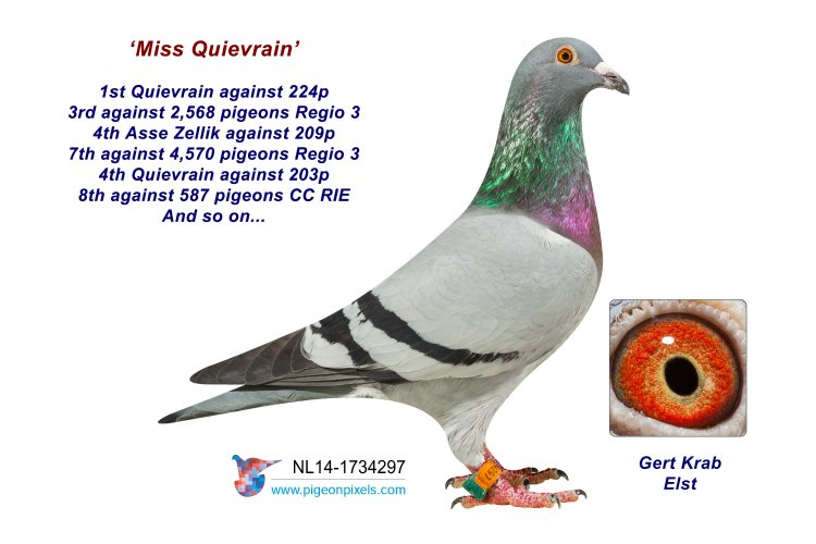 NL14-1734297 Miss Quievrain